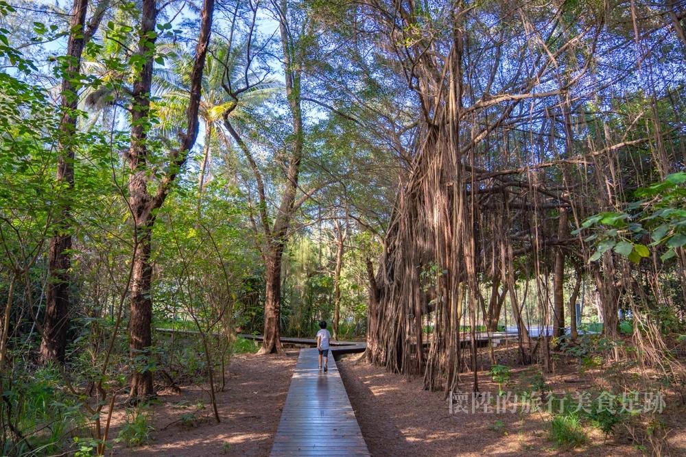 【台南景點】漫步漁光島森林步道,山裡來海裡去的秘境小旅行~